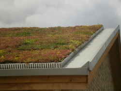 corner of sedum roof on house
